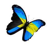 Bahama bayrak kelebek uçuyor, izole üzerinde beyaz arka plan — Foto de Stock