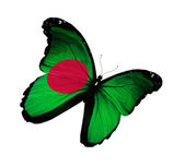 Bangladesh flag butterfly flying, isolated on white background — Stock Photo