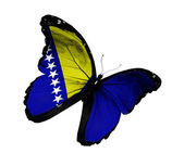 Bosnia and Herzegovina flag butterfly flying, isolated on white — Foto Stock