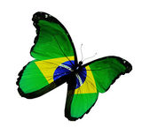 Brazilian flag butterfly flying, isolated on white background — Stock Photo