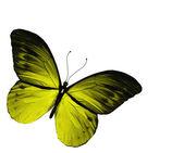 żółty motyl, na białym tle — Zdjęcie stockowe