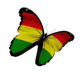 Bolivian flag butterfly flying, isolated on white background — Stock Photo