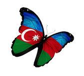 Borboleta de bandeira do azerbaijão voando, isolado no fundo branco — Foto Stock