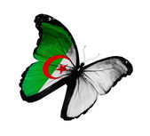 алжирский флаг бабочки летающие, изолированные на белом фоне — Стоковое фото
