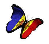 Andorra bayrağı kelebek uçuyor, izole üzerinde beyaz arka plan — Stok fotoğraf