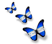 Three Honduras flag butterflies, isolated on white — Stock Photo