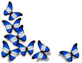 Papillons de drapeau Honduras, isolés sur fond blanc — Photo