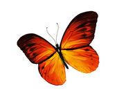 Mariposa amarilla, aislado sobre fondo blanco — Foto de Stock