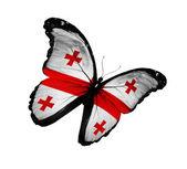Mariposa bandera georgiana volando, aislado sobre fondo blanco — Foto de Stock