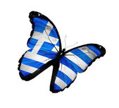 Greek flag butterfly flying, isolated on white background — Stock Photo