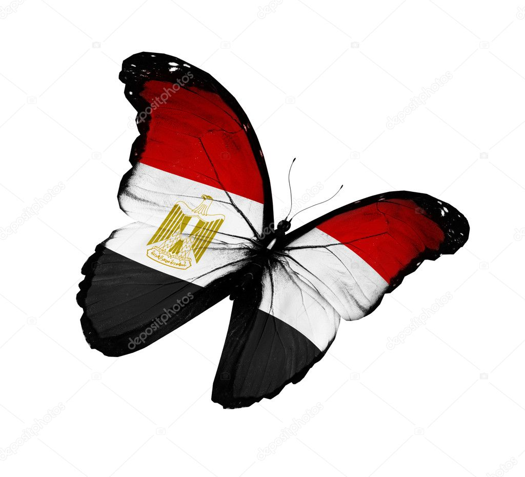 Egyptian flag butterfly flying, isolated on white background  Stock Photo #11979957