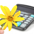 Jerusalem artichoke flower and calculator — Lizenzfreies Foto