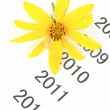 Jerusalem artichoke flower on time line - Stock Photo