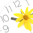 Jerusalem artichoke flower and clock face — Stock Photo