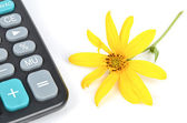Jerusalem artichoke flower and calculator — Foto Stock