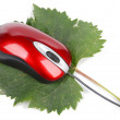 Stock Photo: Computer mouse and leaf
