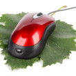 Computer mouse and leaf — Stock Photo