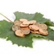 Plane tree leaf and coins — Stock Photo