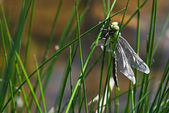 Dragonfly on top of the grass by lake — Stock Photo