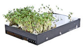 Hard disk drive with Garden Cress — Stock Photo