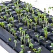 Keyboard with garden cress — Stock Photo
