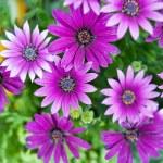 Purple flowers — Stock Photo #10921159