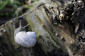 Snail on wood — Stock Photo