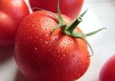 Taze kırmızı domates — Stok fotoğraf