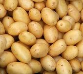 Joven patatas — Foto de Stock