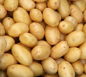 Young potatoes — Foto de Stock