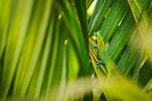 Tropical Lizard — Stock Photo