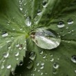 Dew drops on green leaf — Stock Photo