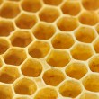 Sweet yellow honeycomb - Stock Photo