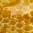 Delicious honeycomb close — Stockfoto