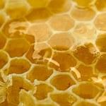 blisko pyszne o strukturze plastra miodu — Zdjęcie stockowe