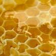 leckere Bienenwabe schließen — Stockfoto