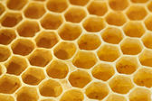 Söt gul honeycomb — Stockfoto