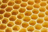 甘い黄色のハニカム — ストック写真