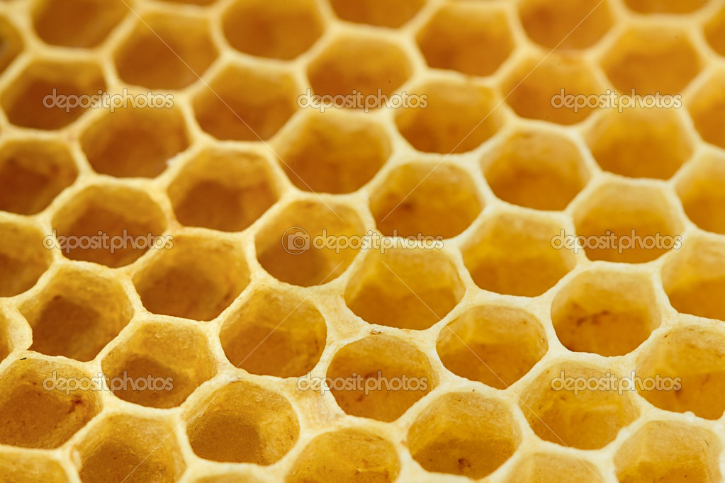 Sweet yellow honeycomb photographed close  Stock Photo #11048971