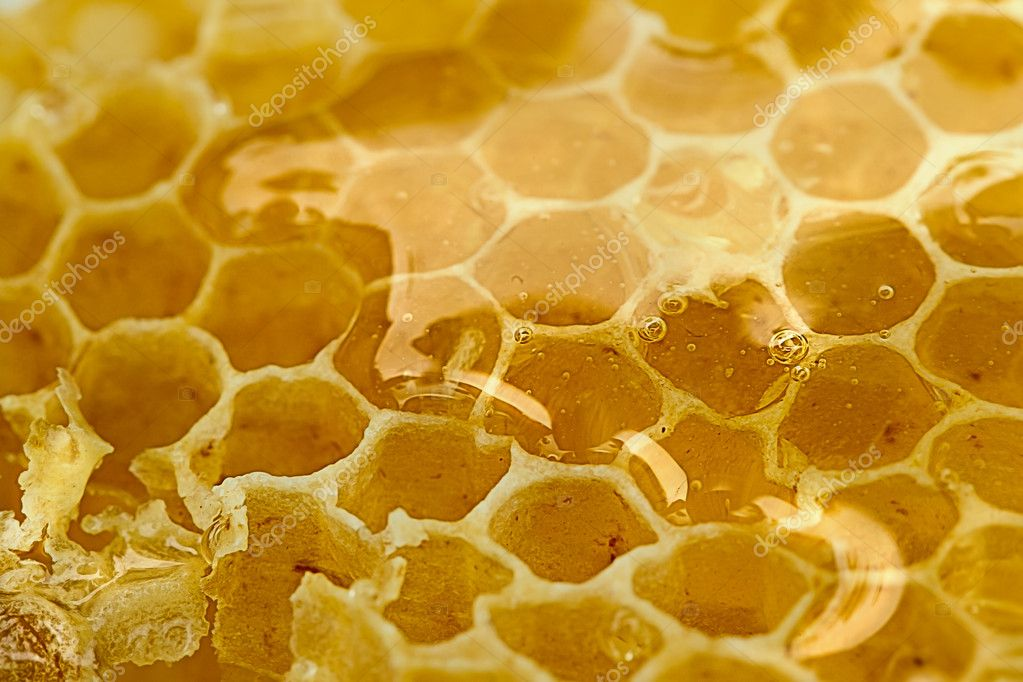 Tasty and sweet honeycomb in close  Photo #11048984