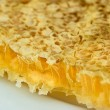 Honey comb close - Stock Photo