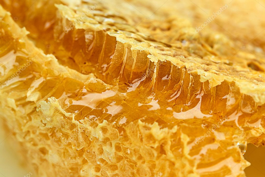 Piece of honey comb in a cut close  Stock Photo #11096632