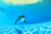 Dolphin under water — Stock Photo
