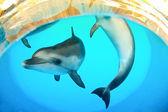Funny marine dolphins — Stock Photo