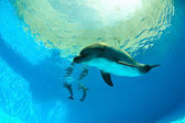 Dolphins under water — Stock Photo