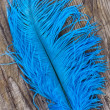 Bright blue quill — Stock Photo