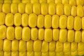 Ear of corn — Foto Stock