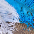 Two color quills — Stock Photo