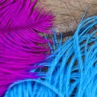 Two color quills — Stock Photo #11751067