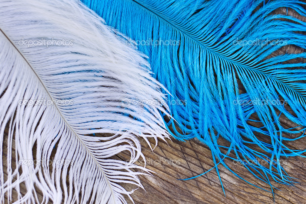 White and blue quills lying close on wood — Stock Photo #11751066